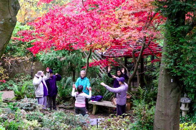Shinrin-yoku at Forest Glades Gardens