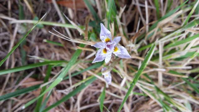Shinrin-yoku flower