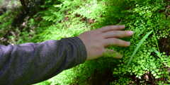 touching ferns
